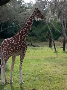 I was not expecting the  safari at Animal Kingdom to be so good
