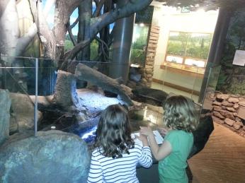 Exploring the exhibits at Denison Pequotsepos Nature Center