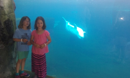 The beluga whales are adorable (and my kids are kinda cute, too)