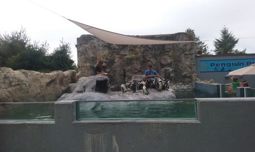 The penguin habitat