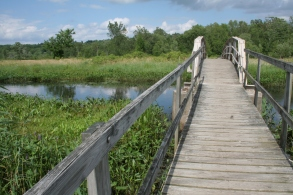Little Pond Boardwalk trail at the White Memorial Conservation Center