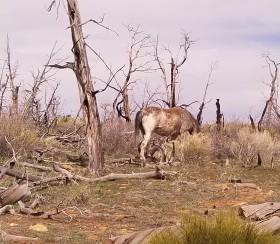 Wild horse, Mesa Verde. Photo by Anastasia Mills Healy