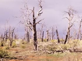 Aftermath of a forest fire, Mesa Verde. Photo by Anastasia Mills Healy
